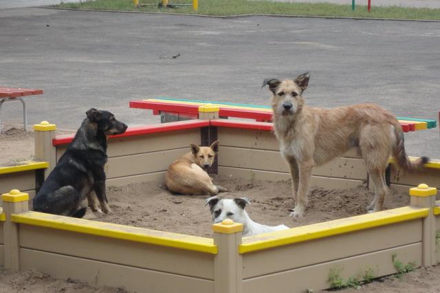 Собаки в песочнице