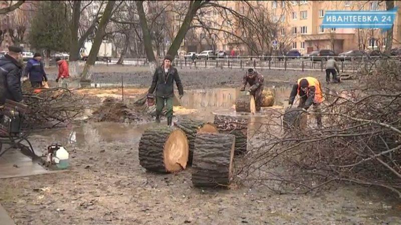 Убирают деревья в сквере