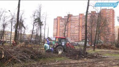 Удаляют пни в парке за КДЦ Первомайский