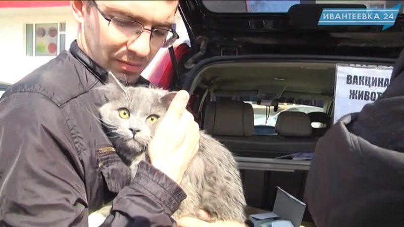 вакцинация животных кот