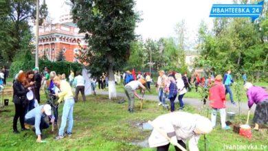 Сажают деревья у КДЦ