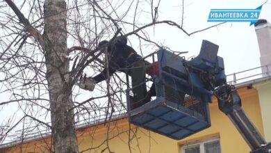Пилят деревья зимой
