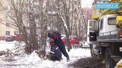 Пилят деревья во дворе
