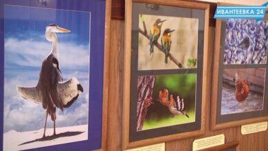 Птицы в объективе фотографии
