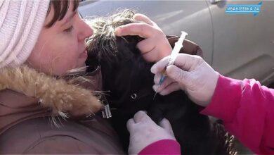 вакцинация собак от бешенства