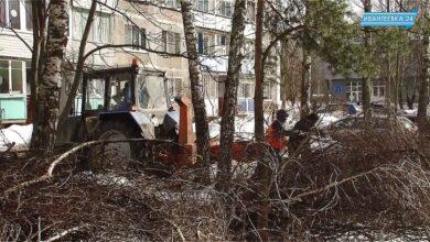 убирают деревья
