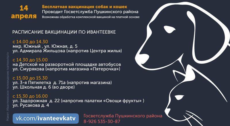 вакцинация кошек и собак апрель