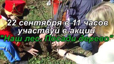 акция Посади дерево