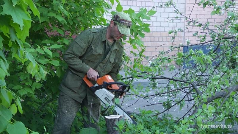 Зачем на Центральном 1 спилили много деревьев