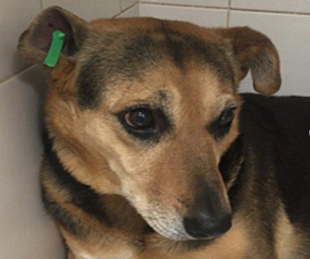 Собака с биркой в ухе не опасна и стерильна
