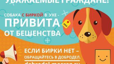 Photo of Не причиняй вреда собаке с биркой!