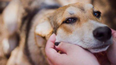 Photo of ФЗ «Об ответственном обращении с животными»