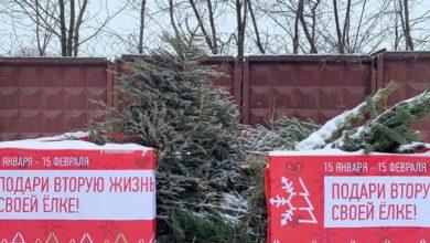 Photo of В г.о. Ивантеевка продолжается экологическая акция «Подари своей ёлке вторую жизнь»