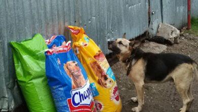 Photo of Молодогвардейцы посетили приют для животных «Пульс»