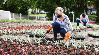 Photo of В 2020 году в Ивантеевке посадят 19 750 цветов