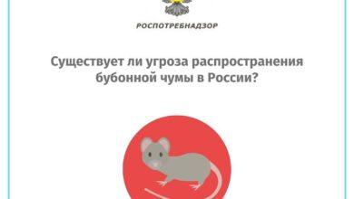 Photo of Опасности распространения бубонной чумы в России нет