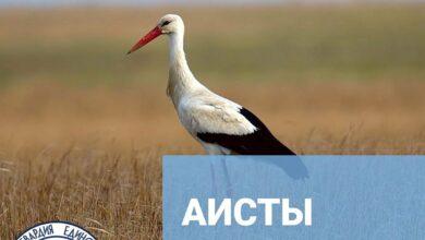 Photo of Природа Московской области. Интересные факты