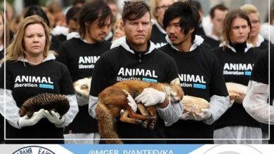 Photo of WWF России — Всемирный фонд дикой природы