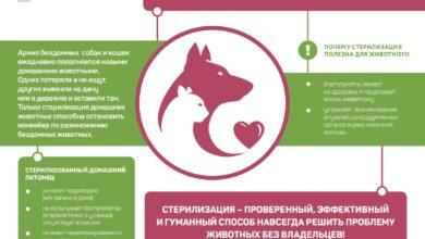 Photo of Почему стерилизация полезна для животного?