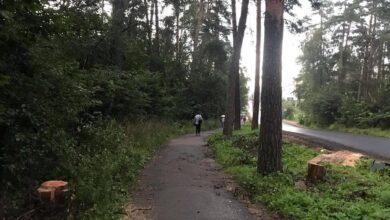 Photo of Спилены сухие деревья вдоль пешеходной дорожки к станции Ивантеевка-2