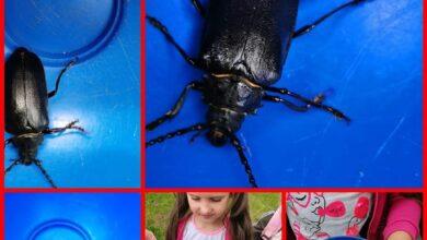 Photo of Детский сад №19 познает энтомологию