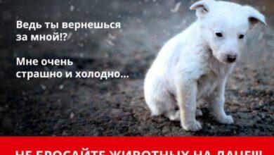 Photo of Уезжая с дачи, не оставляйте животных одних на участках!