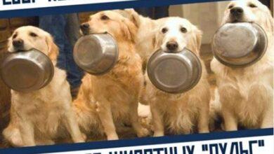 Photo of С 15 по 25 сентября проходит благотворительная акция по оказанию помощи приюту для собак и кошек!