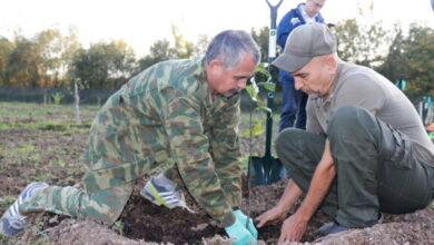 Photo of «Сохраним лес»: Депутаты Мособлдумы заложили сад-маточник сирени в Ивантеевском лесопитомнике