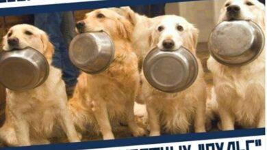 Photo of С 28.09.2020 по 02.10.2020 проходит благотворительная акция по оказанию помощи приюту для собак и кошек