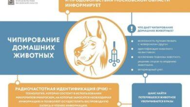Photo of Что дает чипирование домашних животных?