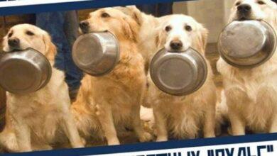 Photo of С 05 по 09 октября в Ивантеевке проходит благотворительная акция по оказанию помощи приюту для собак и кошек!