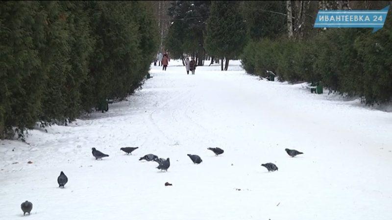 Городской парк Ивантеевки зимой