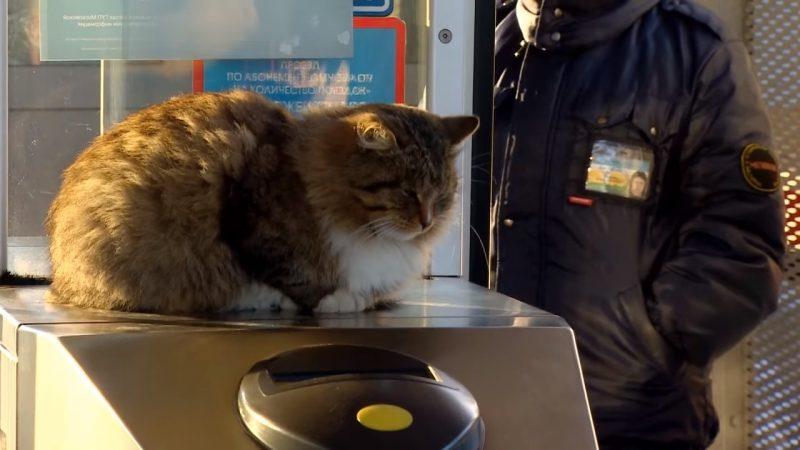 Кот контролер на станции